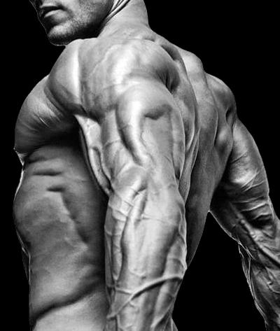 ipertrofia_muscolare
