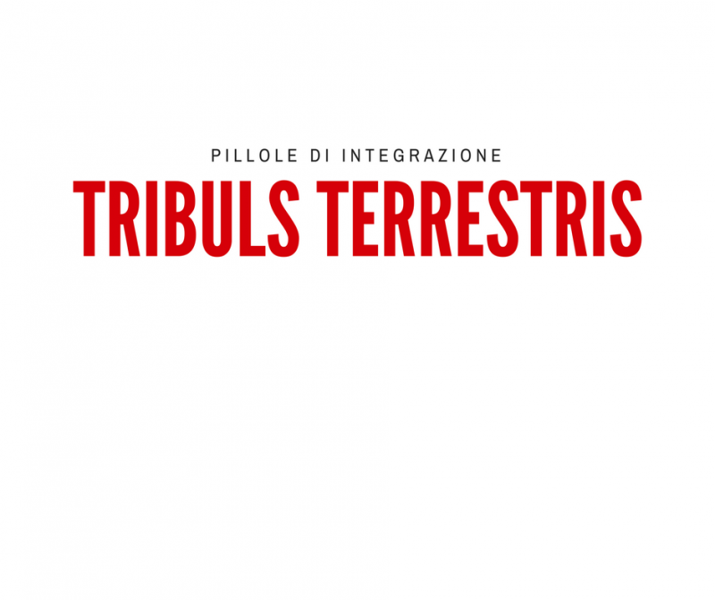 pillole-di-integrazione_-tribulus-terrestris