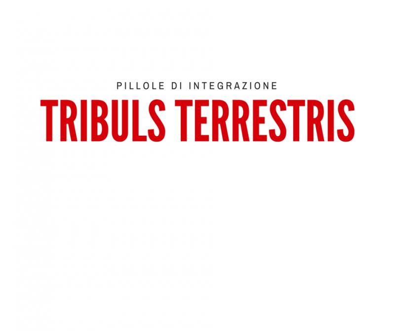 pillole-di-integrazione_-tribulus-terrestris